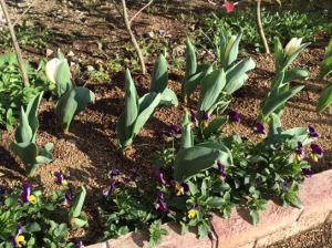 春がそこまで2