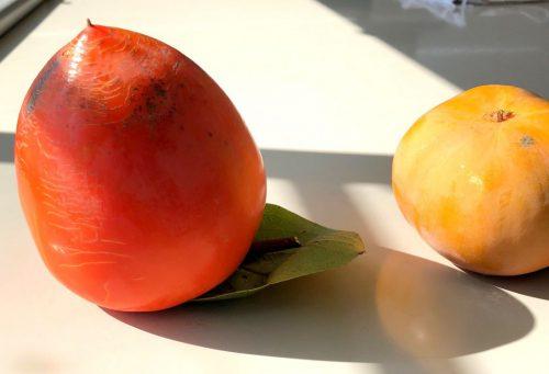 富士柿と甘柿とぶどう